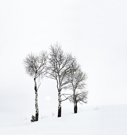 White Horizon on the Behance Network #trees #photography #snow #contrast