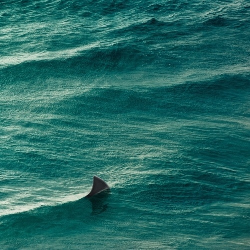 YIMMY'S YAYO™ #ocean #sea #shark