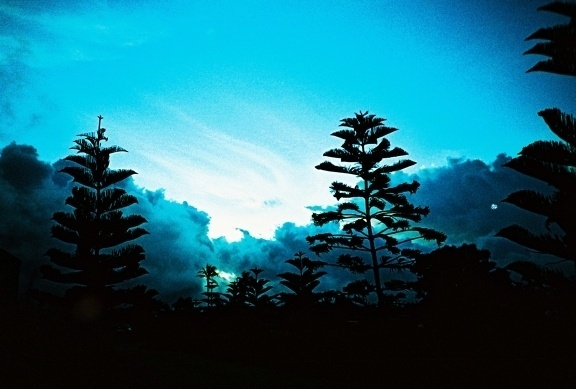 I feel pine #analogue #process #lomography #cross #lomo #landscape #pro