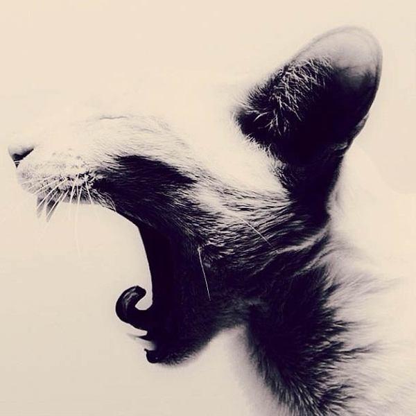 Katia Mi instagram 11 #kitten #photo #cat #yawning #animal