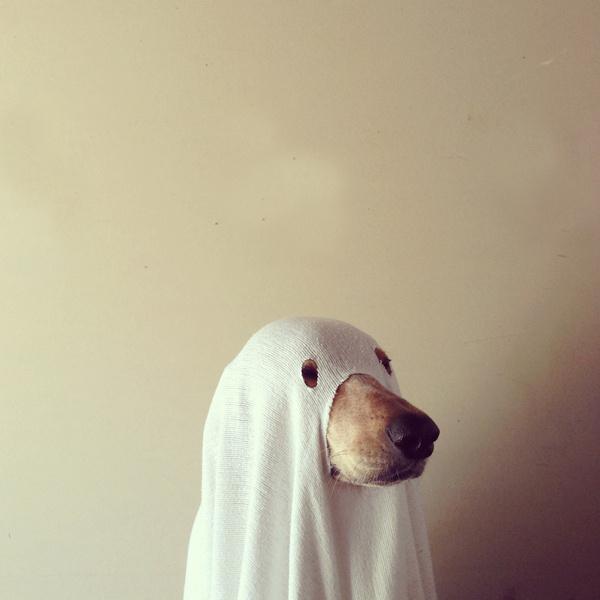 fucktum, thepinesaredancing: maddieonthings: Halloween... #dog