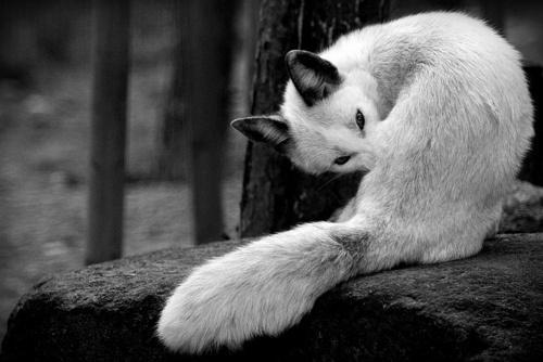DETHJUNKIE* #fox