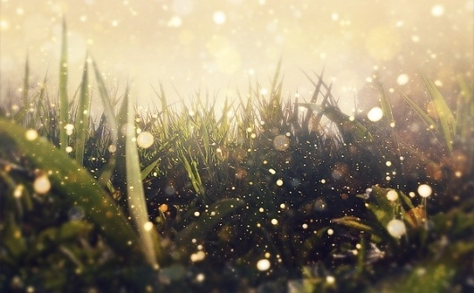 Hidden in the Magic Garden on the Behance Network #water #grass #photo #picture #dew #bokeh #image #photography #rain #drops