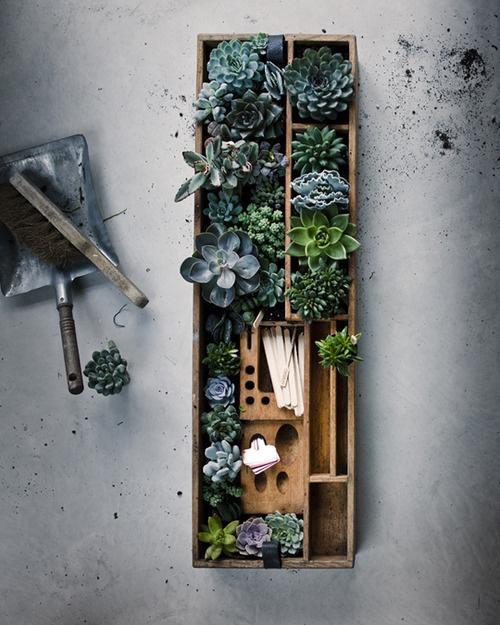 image #photography #plants