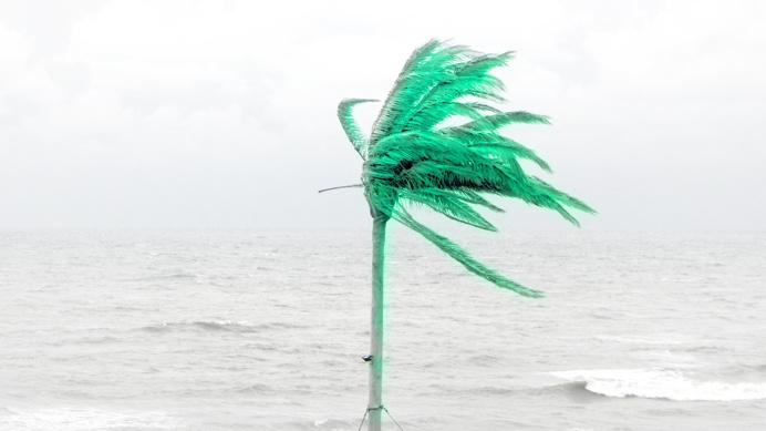 palm_ George No.5, Zandvoort (NL) PHOTOGRAPHIE © [ catrin mackowski ]