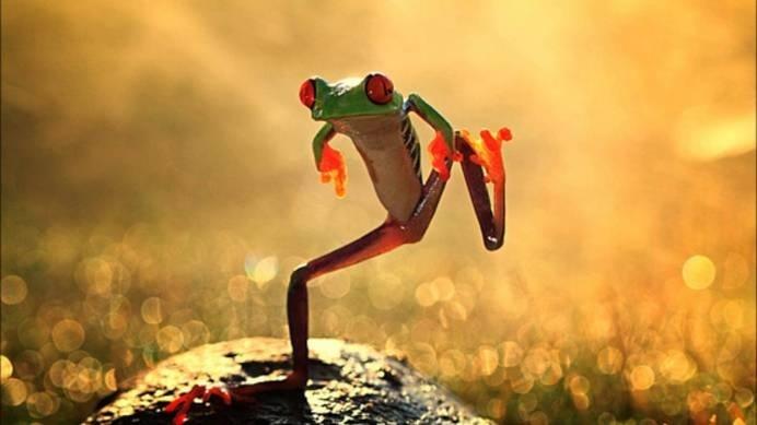 Frog Macro Portrait #inspiration #photography #macro
