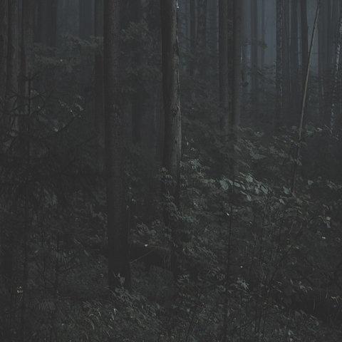 FFFFOUND! | trust_no1 #forest #photography #dark #leaves