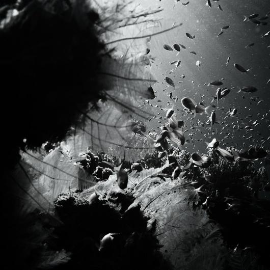 水中の写真 : Hengki Koentjoro Photography   Ghost Room #ocean #white #fish #black #mono #photography #and