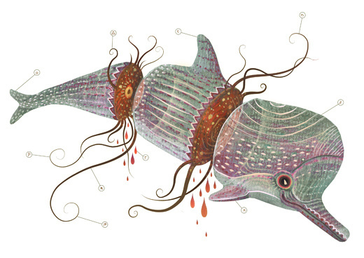 B I O P H I L I A on Behance #biology #dolphin #illustration #anathomy #watercolor #parts