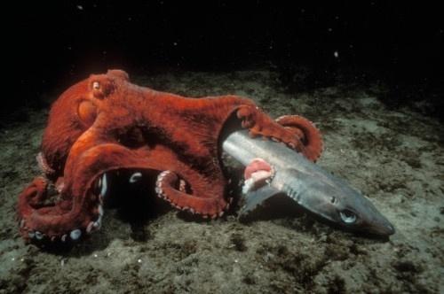 W E L L ※ F E D #octopus #shark