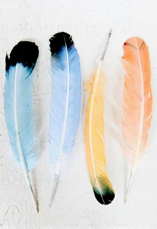 quills! http://www.designsponge.com/2011/08/diy project feather pen pal stationery.html #feathers