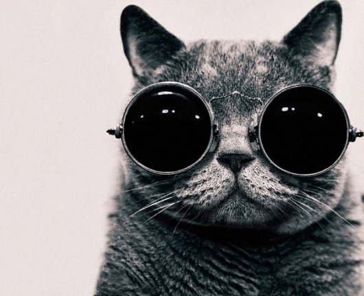 Meow | Colossal #glasses #photography #cat