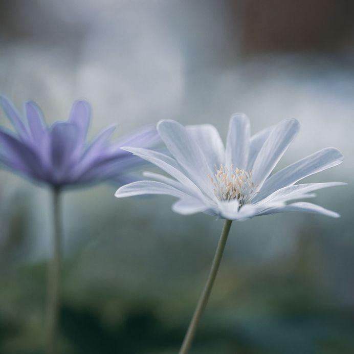 #instaflower: Beautiful Flower Photography by Marie Rich