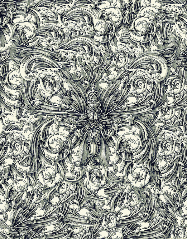 Hey, You Should Check Out the Colossal ShopNovember 29 #insect #illustration #detailed