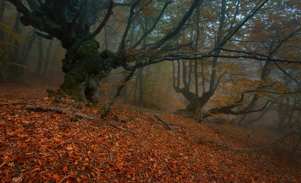 35PHOTO Andrew Ulyashev (Mercand) Keepers #woods #photography #autumn #forest #trees #leaves