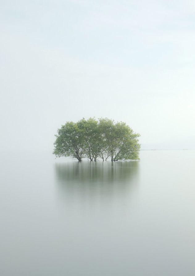 { i n s p i r a r e } #trees #photography #landscape #water #ocean #flood #calm