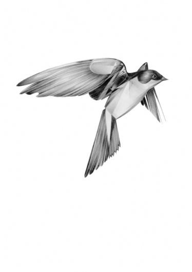 semblance.jpg (Gambar JPEG, ukuran piksel 502x711) - Skala (78%) #interesting #bird #hellovon #minimal #hello #von #awesome